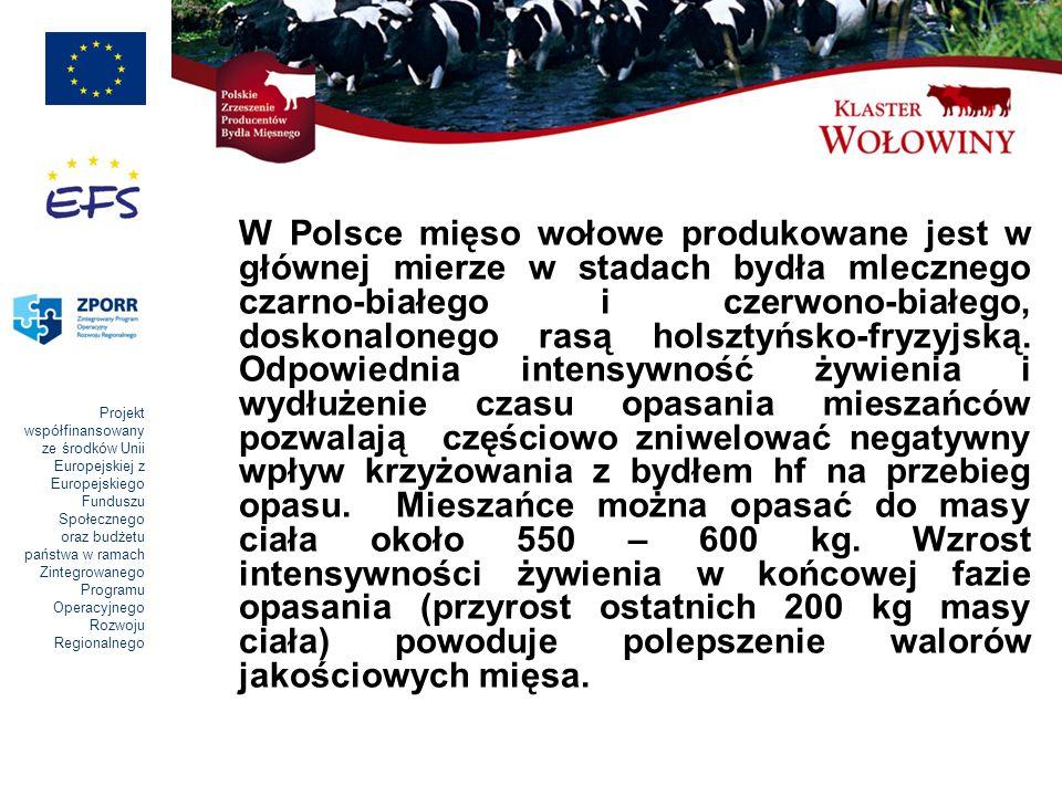 Projekt współfinansowany ze środków Unii Europejskiej z Europejskiego Funduszu Społecznego oraz budżetu państwa w ramach Zintegrowanego Programu Operacyjnego Rozwoju Regionalnego W Polsce mięso wołowe produkowane jest w głównej mierze w stadach bydła mlecznego czarno-białego i czerwono-białego, doskonalonego rasą holsztyńsko-fryzyjską.