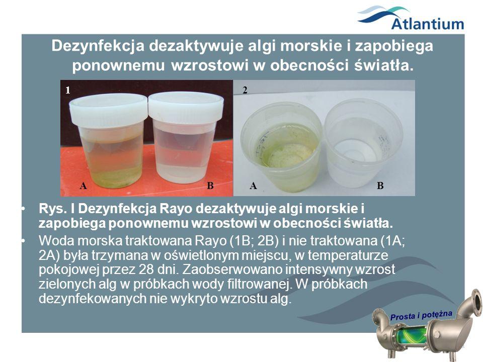 Prosta i potężna Dezynfekcja dezaktywuje algi morskie i zapobiega ponownemu wzrostowi w obecności światła. Rys. I Dezynfekcja Rayo dezaktywuje algi mo