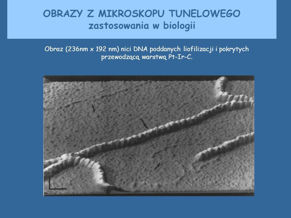 Obraz (236nm x 192 nm) nici DNA poddanych liofilizacji i pokrytych przewodzącą warstwą Pt-Ir-C. OBRAZY Z MIKROSKOPU TUNELOWEGO zastosowania w biologii
