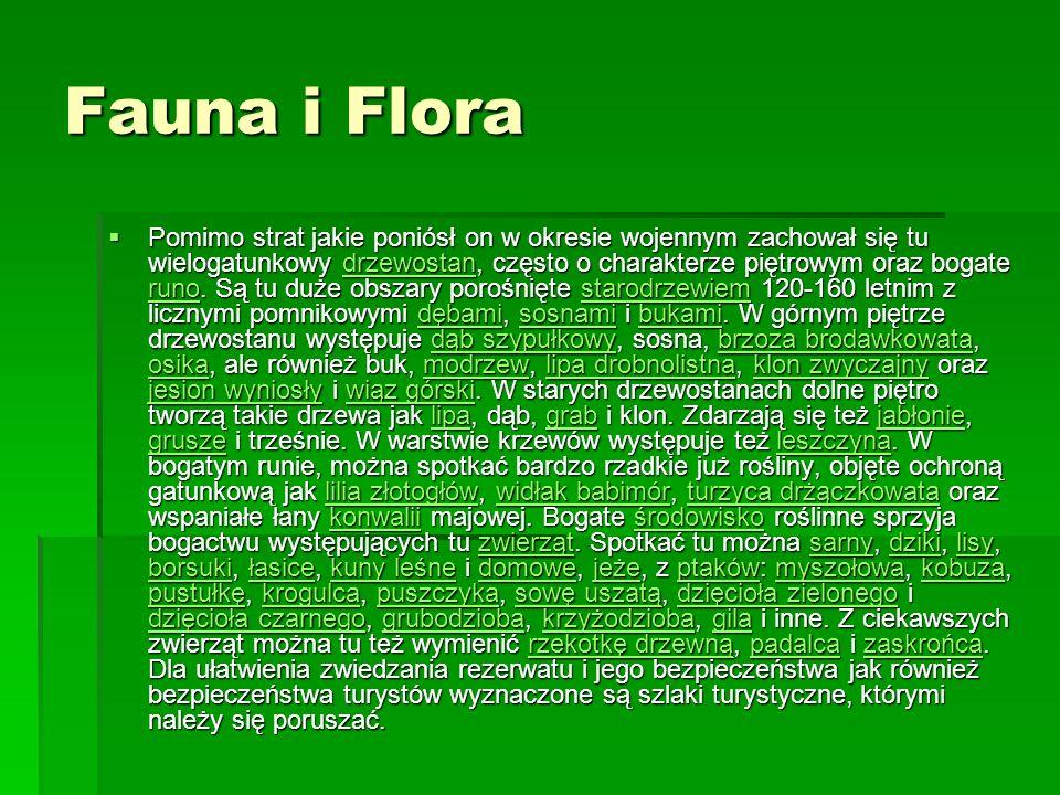Fauna i Flora Pomimo strat jakie poniósł on w okresie wojennym zachował się tu wielogatunkowy drzewostan, często o charakterze piętrowym oraz bogate runo.