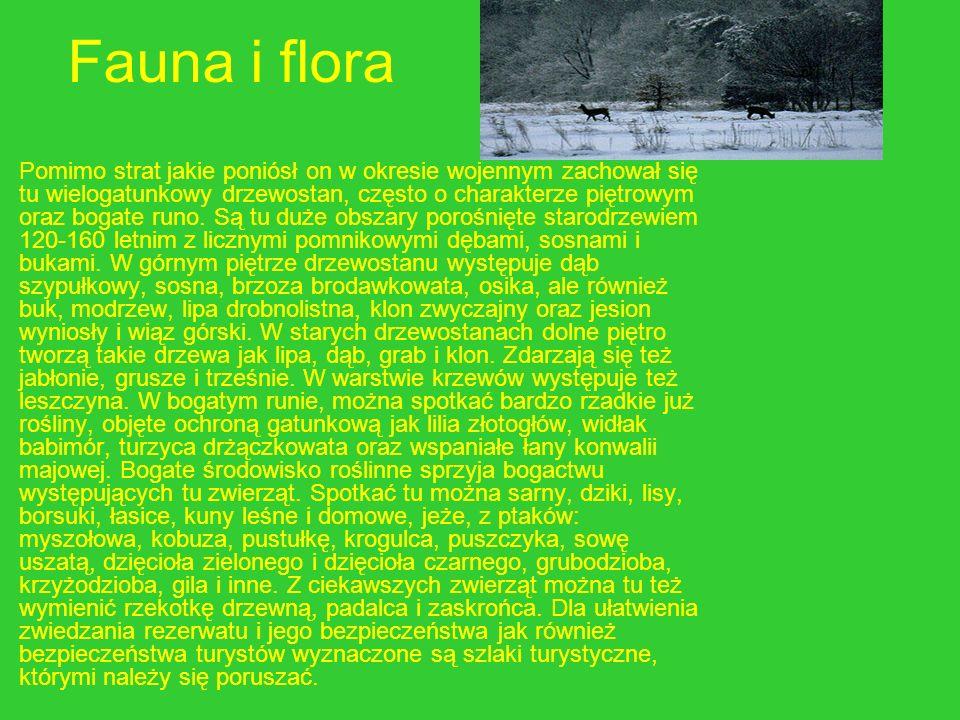 Fauna i flora Pomimo strat jakie poniósł on w okresie wojennym zachował się tu wielogatunkowy drzewostan, często o charakterze piętrowym oraz bogate r