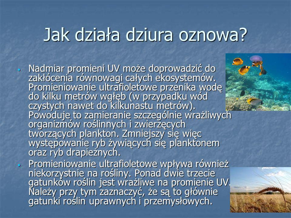 Jak działa dziura oznowa? Nadmiar promieni UV może doprowadzić do zakłócenia równowagi całych ekosystemów. Promieniowanie ultrafioletowe przenika wodę