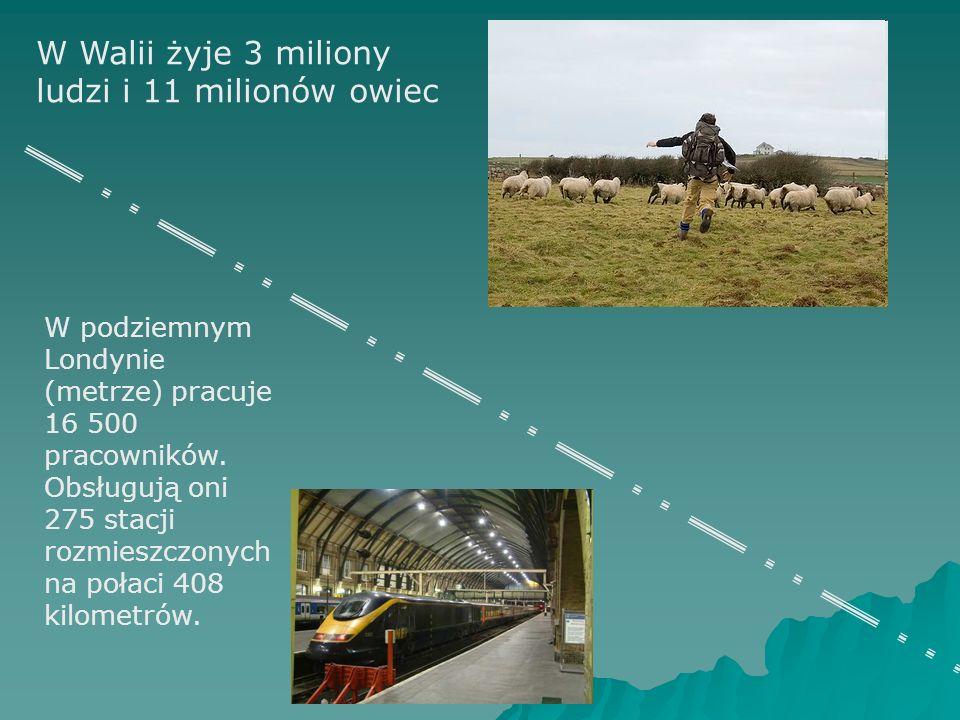 W Walii żyje 3 miliony ludzi i 11 milionów owiec W podziemnym Londynie (metrze) pracuje 16 500 pracowników. Obsługują oni 275 stacji rozmieszczonych n