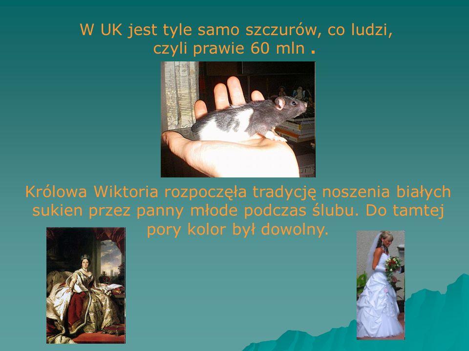 W UK jest tyle samo szczurów, co ludzi, czyli prawie 60 mln. Królowa Wiktoria rozpoczęła tradycję noszenia białych sukien przez panny młode podczas śl