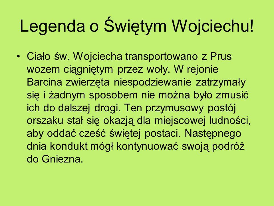 Legenda o Świętym Wojciechu! Ciało św. Wojciecha transportowano z Prus wozem ciągniętym przez woły. W rejonie Barcina zwierzęta niespodziewanie zatrzy