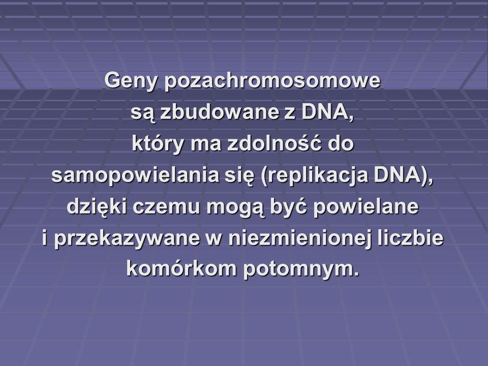 Geny pozachromosomowe są zbudowane z DNA, który ma zdolność do samopowielania się (replikacja DNA), dzięki czemu mogą być powielane i przekazywane w n