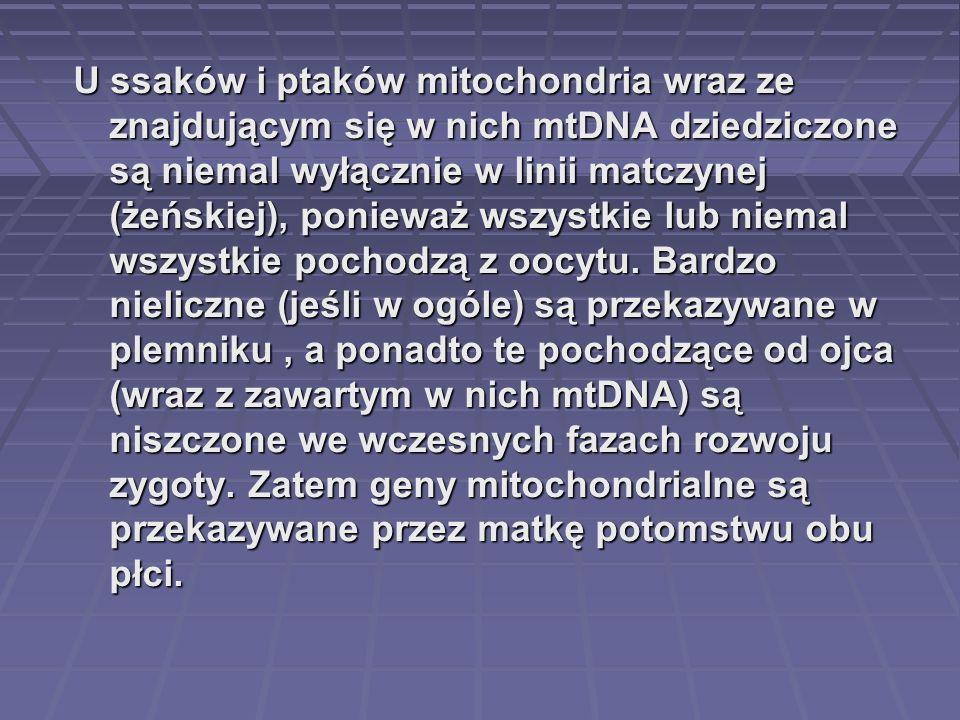 U ssaków i ptaków mitochondria wraz ze znajdującym się w nich mtDNA dziedziczone są niemal wyłącznie w linii matczynej (żeńskiej), ponieważ wszystkie
