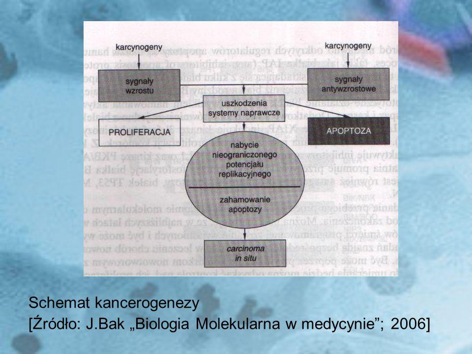 Schemat kancerogenezy [Źródło: J.Bak Biologia Molekularna w medycynie; 2006]