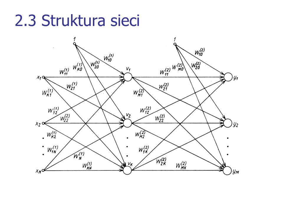 2.3 Struktura sieci