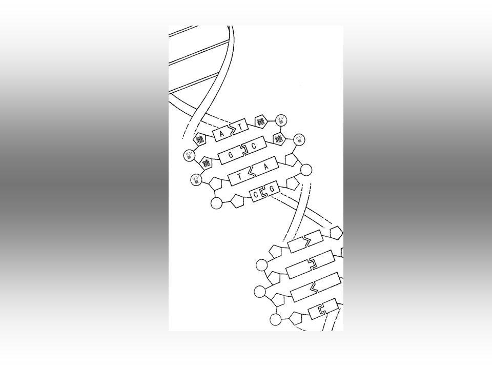 Porównajmy możliwości i własności komputera tradycyjnego opartego na krzemie i układach scalonych z komputerem biologicznym opartym na cząsteczkach DNA i inżynierii genetycznej.