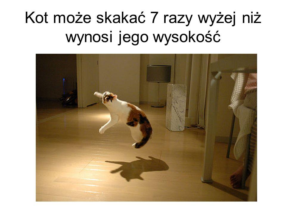 Kot może skakać 7 razy wyżej niż wynosi jego wysokość