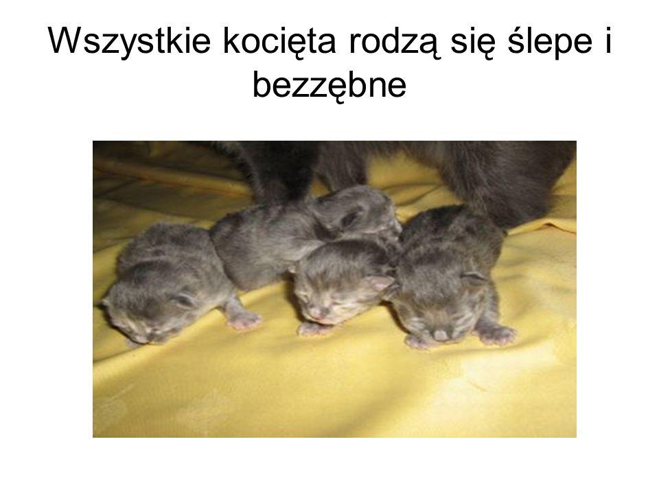 Wszystkie kocięta rodzą się ślepe i bezzębne