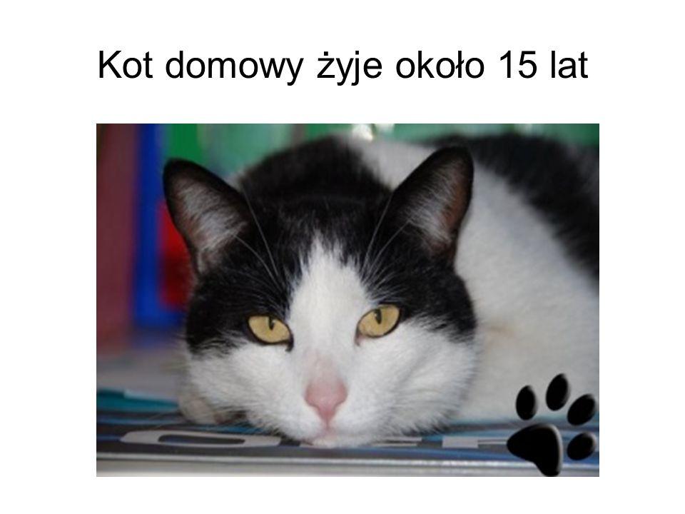Kot domowy żyje około 15 lat