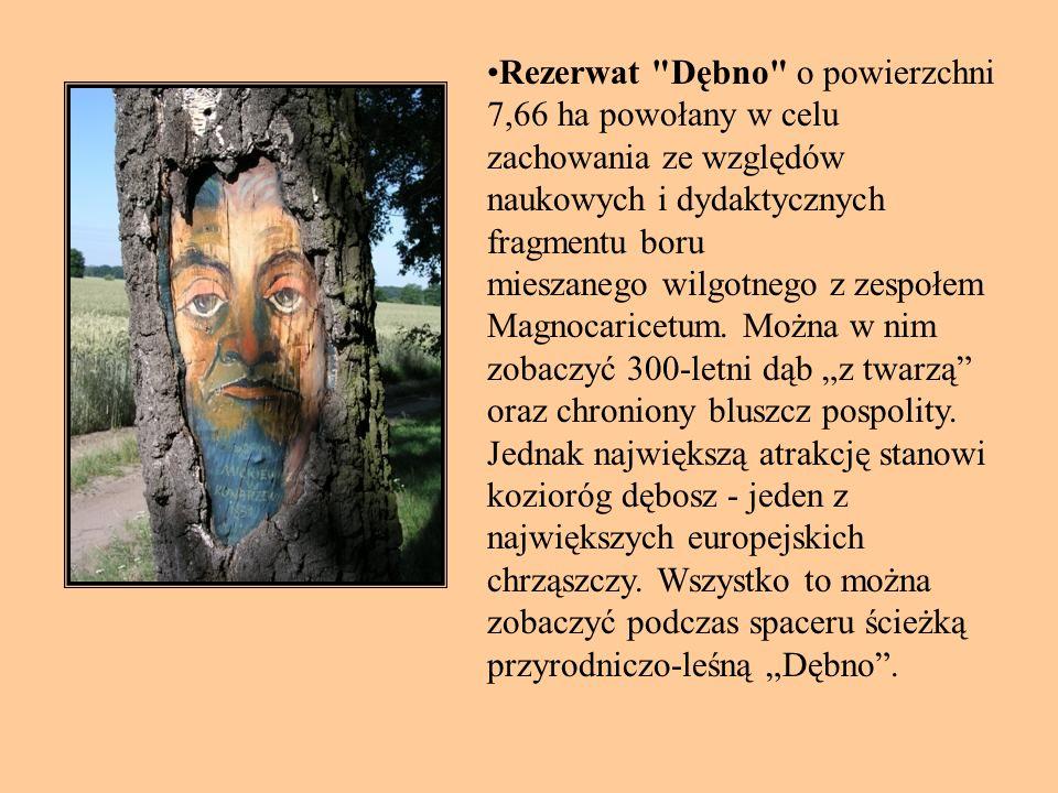 Rezerwat Dębno o powierzchni 7,66 ha powołany w celu zachowania ze względów naukowych i dydaktycznych fragmentu boru mieszanego wilgotnego z zespołem Magnocaricetum.