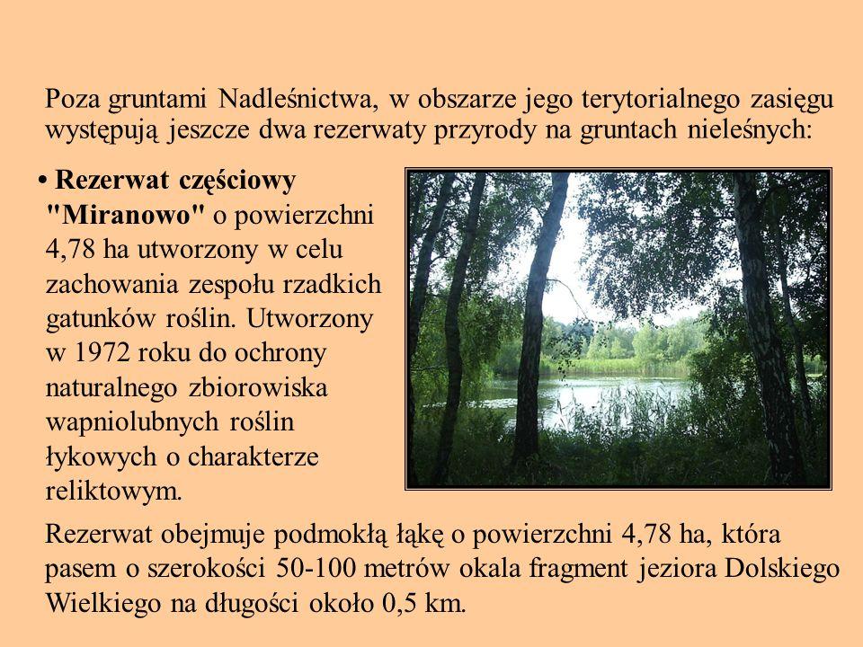 Poza gruntami Nadleśnictwa, w obszarze jego terytorialnego zasięgu występują jeszcze dwa rezerwaty przyrody na gruntach nieleśnych: Rezerwat częściowy Miranowo o powierzchni 4,78 ha utworzony w celu zachowania zespołu rzadkich gatunków roślin.