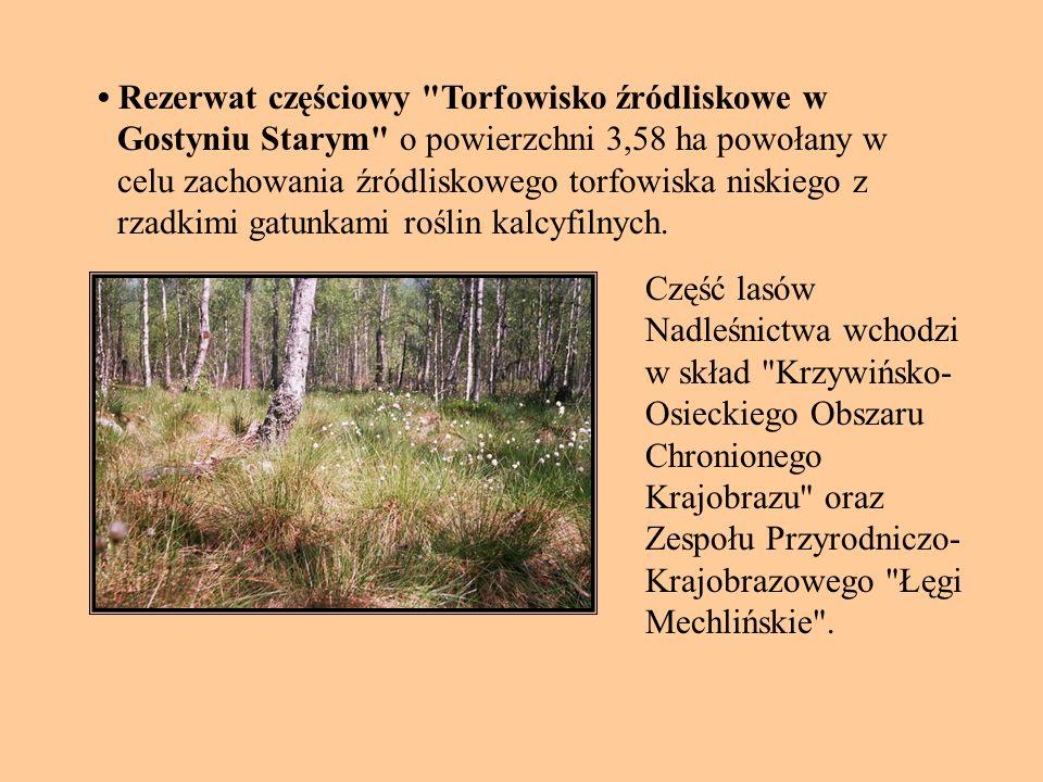 Rezerwat częściowy Torfowisko źródliskowe w Gostyniu Starym o powierzchni 3,58 ha powołany w celu zachowania źródliskowego torfowiska niskiego z rzadkimi gatunkami roślin kalcyfilnych.