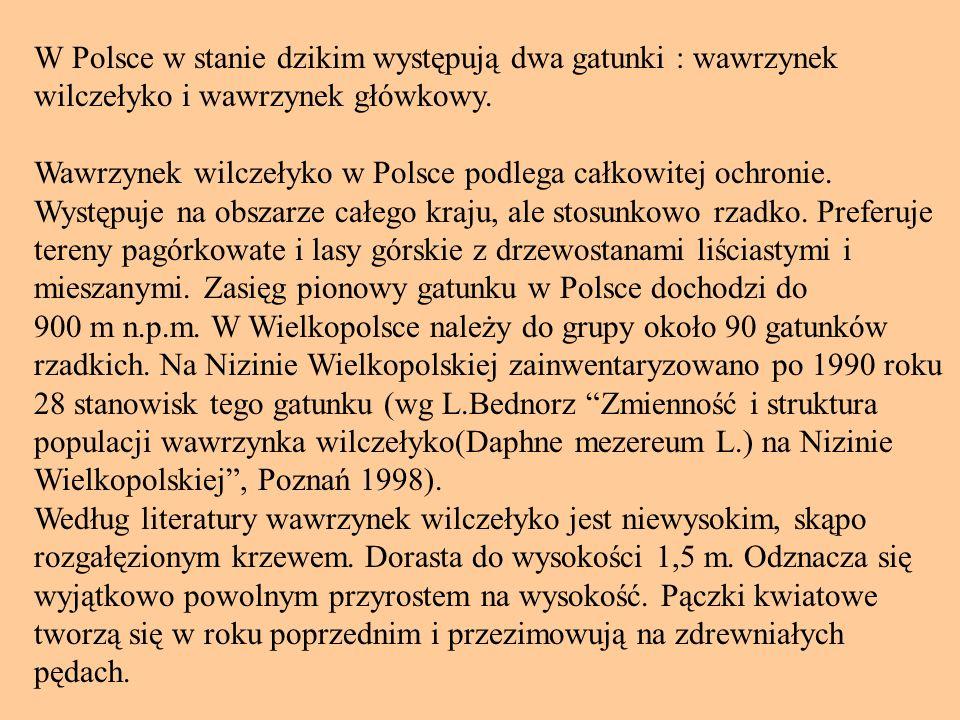 W Polsce w stanie dzikim występują dwa gatunki : wawrzynek wilczełyko i wawrzynek główkowy. Wawrzynek wilczełyko w Polsce podlega całkowitej ochronie.