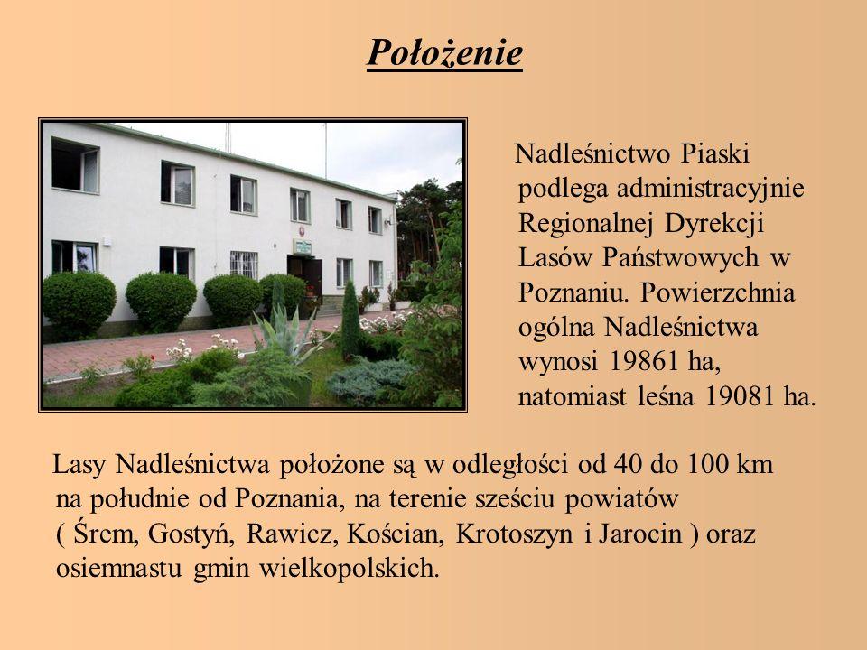 Położenie Nadleśnictwo Piaski podlega administracyjnie Regionalnej Dyrekcji Lasów Państwowych w Poznaniu. Powierzchnia ogólna Nadleśnictwa wynosi 1986