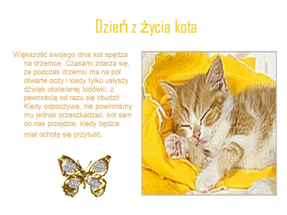 Ogon – barometr nastroju Ogon wysoko podniesiony – Twój kot mówi cześć Tobie lub innemu kotu.
