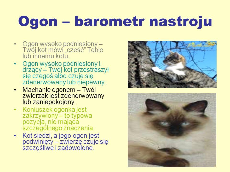 Ogon – barometr nastroju Ogon wysoko podniesiony – Twój kot mówi cześć Tobie lub innemu kotu. Ogon wysoko podniesiony i drżący – Twój kot przestraszył