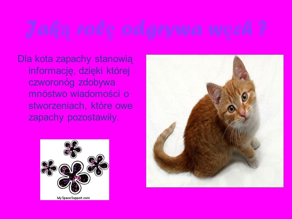 Jak ą rol ę odgrywa w ę ch ? Dla kota zapachy stanowią informację, dzięki której czworonóg zdobywa mnóstwo wiadomości o stworzeniach, które owe zapach