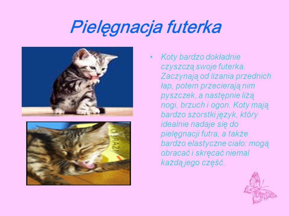 Kocie akcesoria Nie musisz kupować wielu rzeczy dla swojego kota.