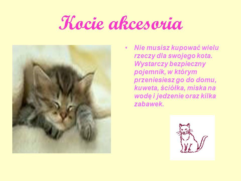 Kot w domu - pierwszy dzie ń Kiedy po raz pierwszy przyniesiesz kota do domu, jak myślisz: jak musi się czuć.
