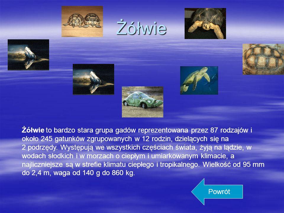 Ssaki Warto wiedzieć: Borsuk jest wszystkożerny. Główne jego pożywienie to korzonki, grzyby, żołędzie, ślimaki, dżdżownice oraz wszelkiego rodzaju owa