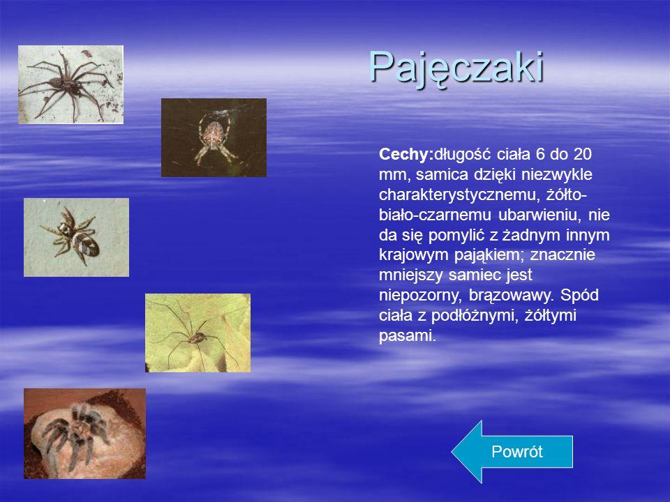 Żółwie Żółwie to bardzo stara grupa gadów reprezentowana przez 87 rodzajów i około 245 gatunków zgrupowanych w 12 rodzin, dzielących się na 2 podrzędy