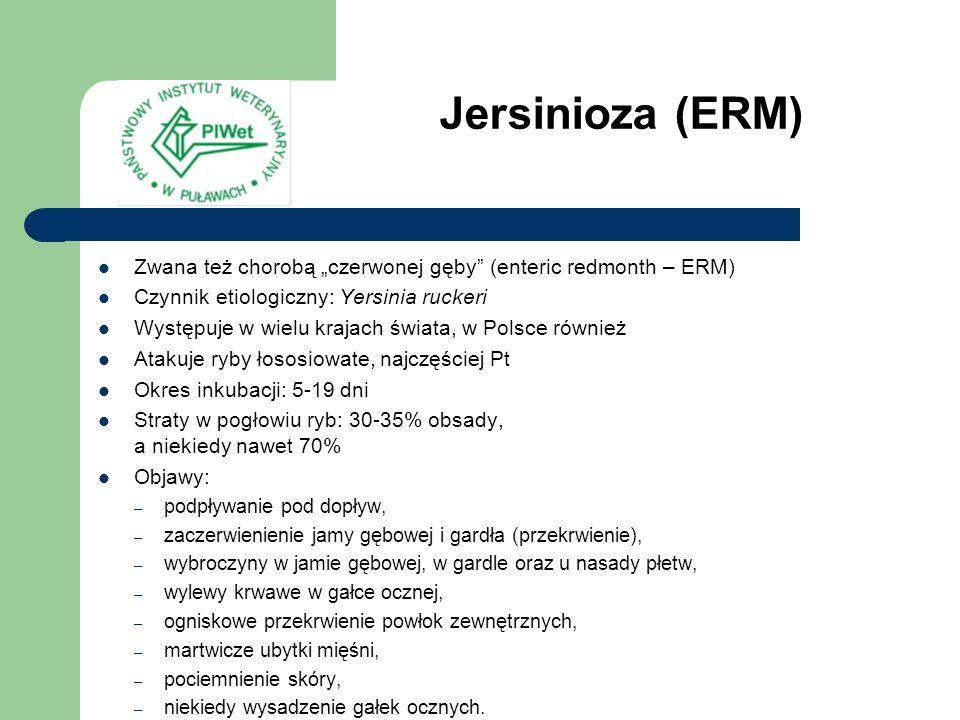 Jersinioza (ERM) Zwana też chorobą czerwonej gęby (enteric redmonth – ERM) Czynnik etiologiczny: Yersinia ruckeri Występuje w wielu krajach świata, w