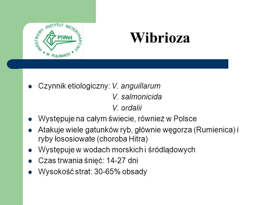 Czynnik etiologiczny: V. anguillarum V. salmonicida V. ordalii Występuje na całym świecie, również w Polsce Atakuje wiele gatunków ryb, głównie węgorz