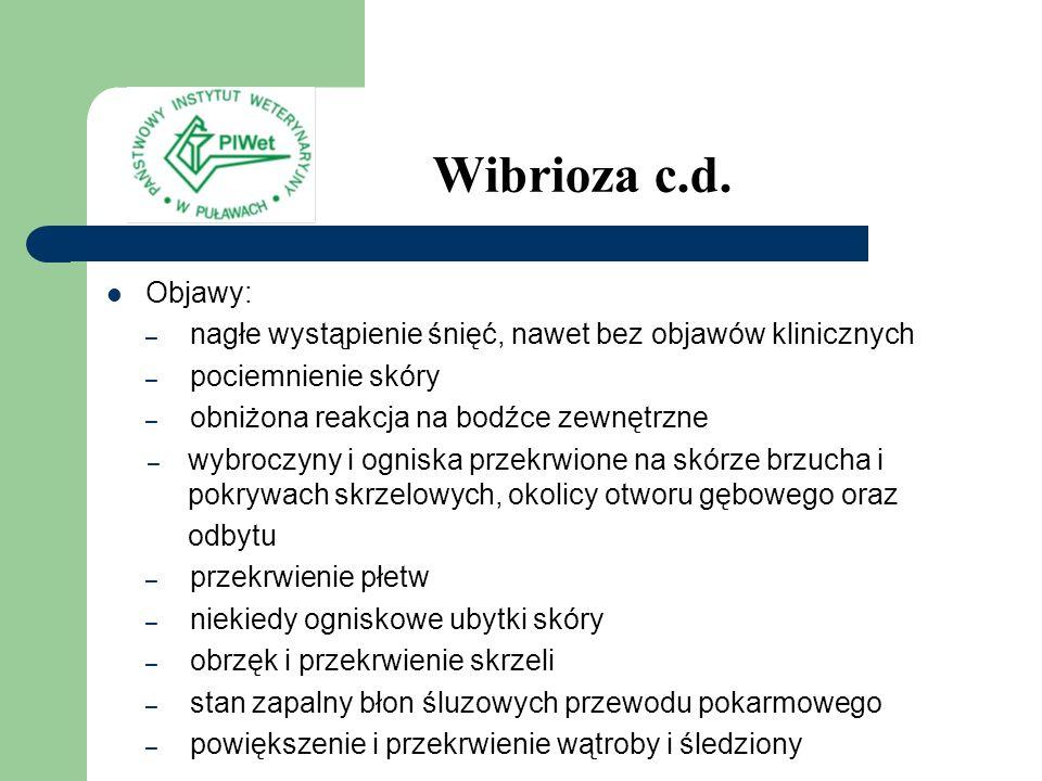 Wibrioza c.d. Objawy: – nagłe wystąpienie śnięć, nawet bez objawów klinicznych – pociemnienie skóry – obniżona reakcja na bodźce zewnętrzne – wybroczy