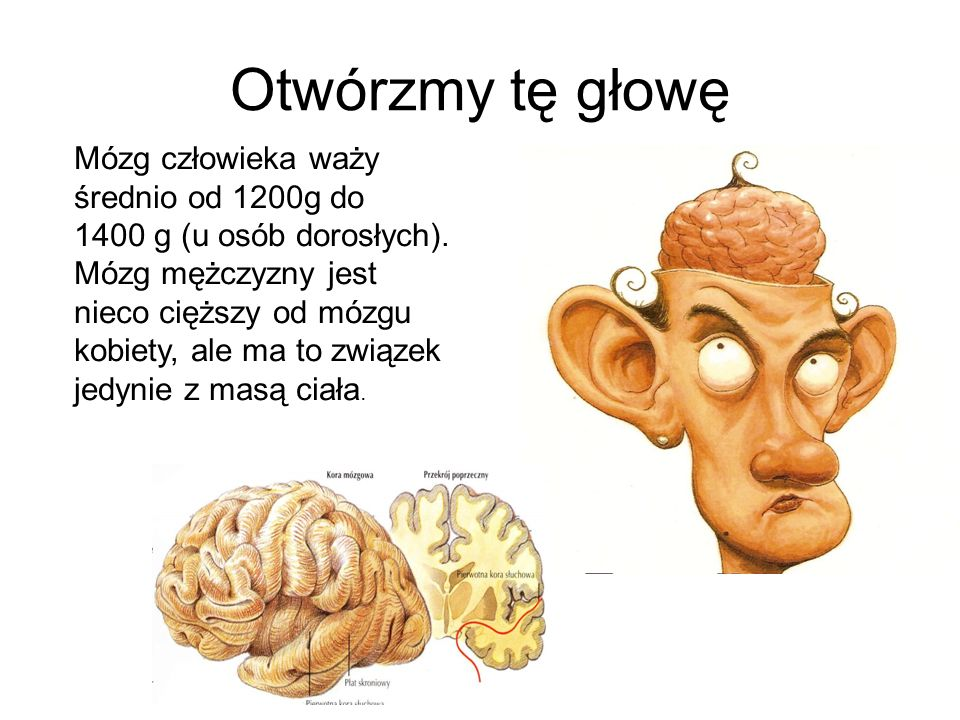 Otwórzmy tę głowę Mózg człowieka waży średnio od 1200g do 1400 g (u osób dorosłych).
