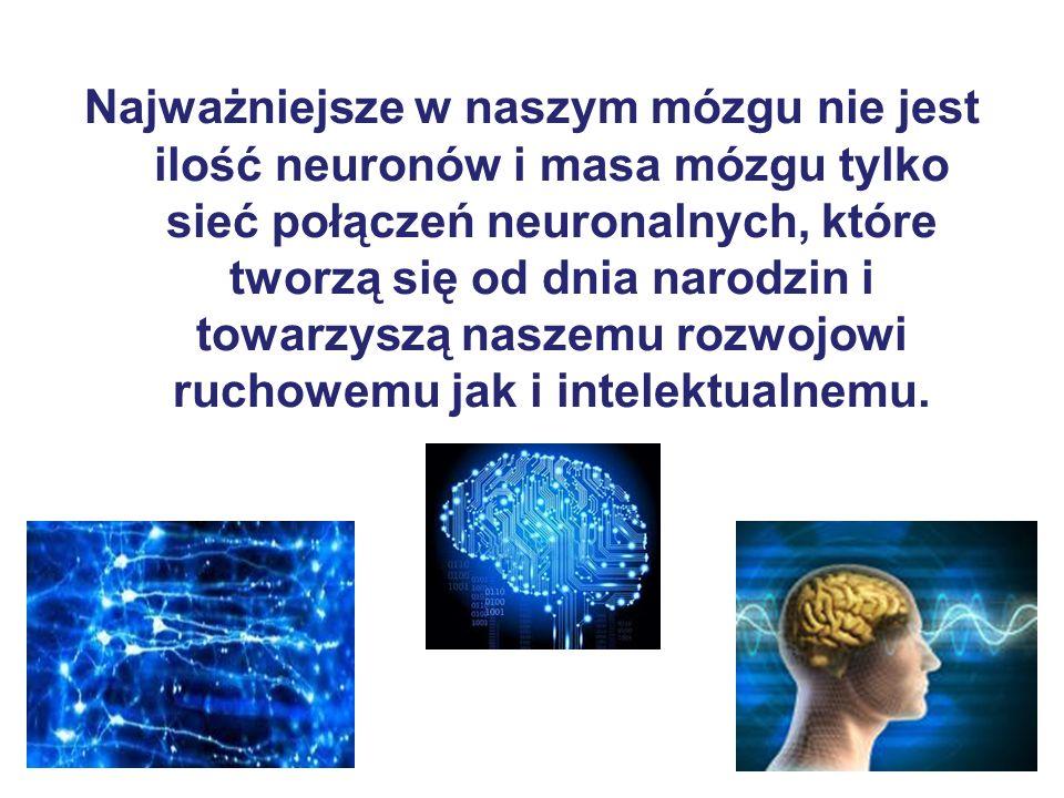 Najważniejsze w naszym mózgu nie jest ilość neuronów i masa mózgu tylko sieć połączeń neuronalnych, które tworzą się od dnia narodzin i towarzyszą naszemu rozwojowi ruchowemu jak i intelektualnemu.