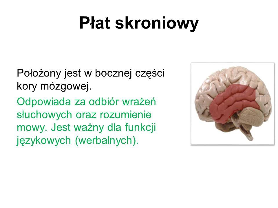 Płat skroniowy Położony jest w bocznej części kory mózgowej.