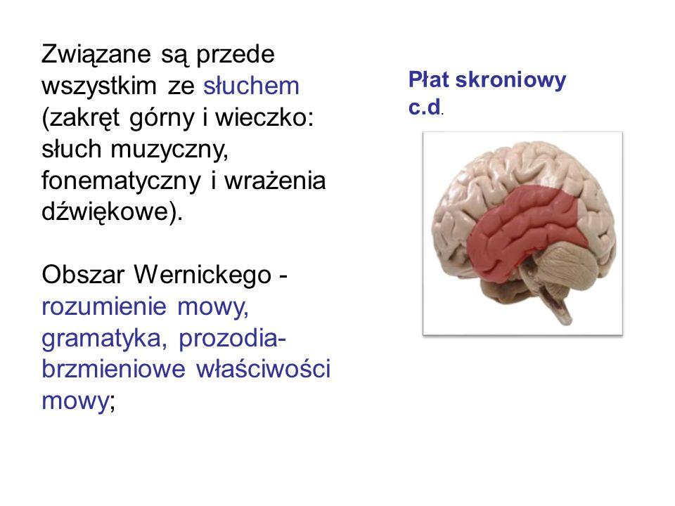 Związane są przede wszystkim ze słuchem (zakręt górny i wieczko: słuch muzyczny, fonematyczny i wrażenia dźwiękowe).