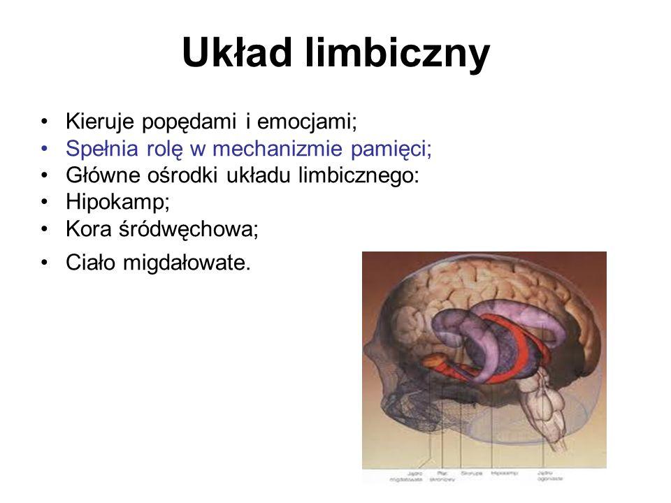 Układ limbiczny Kieruje popędami i emocjami; Spełnia rolę w mechanizmie pamięci; Główne ośrodki układu limbicznego: Hipokamp; Kora śródwęchowa; Ciało migdałowate.