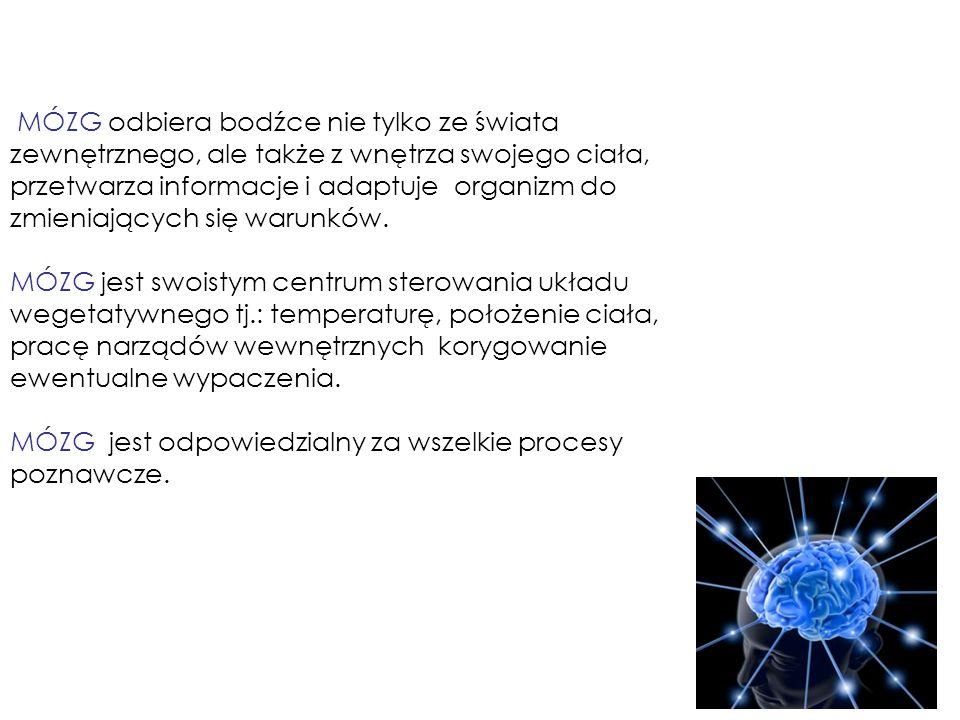 Zakręt dolny: rozpoznawanie obiektów.Kategoryzacja obiektów; pamięć werbalna, zapamiętywanie.