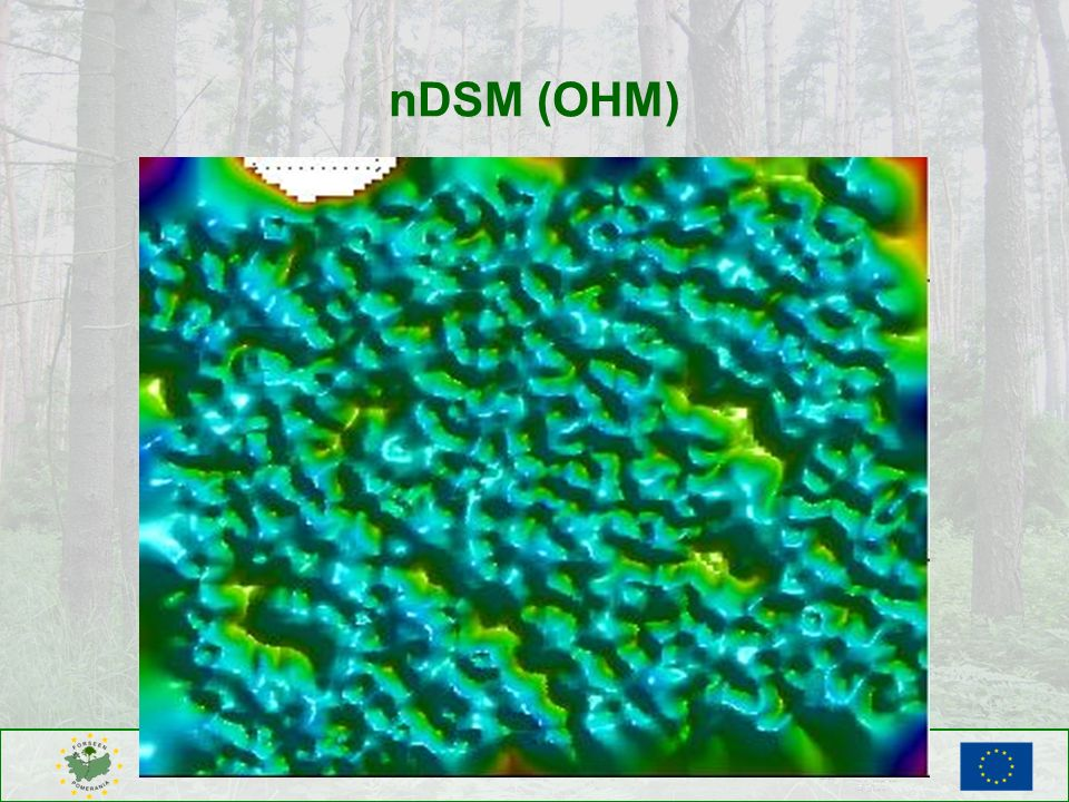 nDSM (OHM)