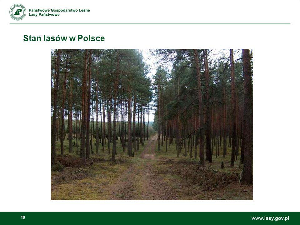 10 Stan lasów w Polsce