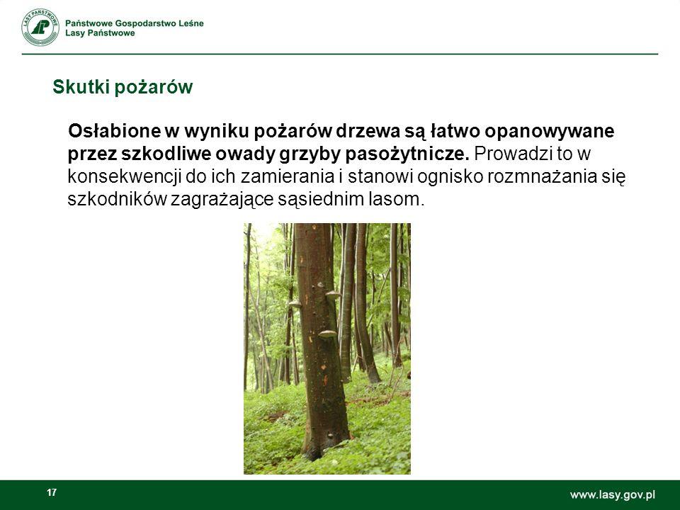 17 Skutki pożarów Osłabione w wyniku pożarów drzewa są łatwo opanowywane przez szkodliwe owady grzyby pasożytnicze. Prowadzi to w konsekwencji do ich