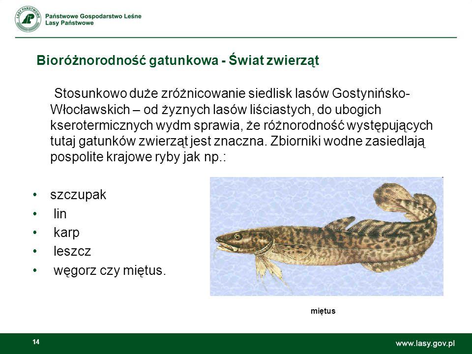 14 Bioróżnorodność gatunkowa - Świat zwierząt Stosunkowo duże zróżnicowanie siedlisk lasów Gostynińsko- Włocławskich – od żyznych lasów liściastych, d