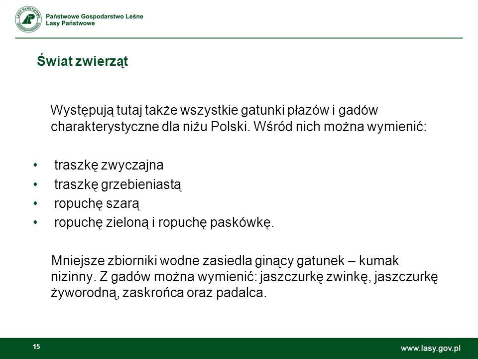 15 Świat zwierząt Występują tutaj także wszystkie gatunki płazów i gadów charakterystyczne dla niżu Polski. Wśród nich można wymienić: traszkę zwyczaj