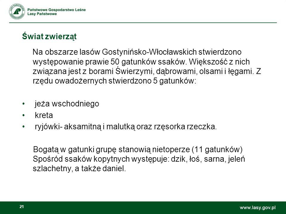 21 Świat zwierząt Na obszarze lasów Gostynińsko-Włocławskich stwierdzono występowanie prawie 50 gatunków ssaków. Większość z nich związana jest z bora