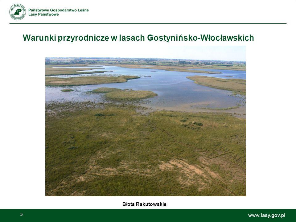 5 Warunki przyrodnicze w lasach Gostynińsko-Włocławskich Błota Rakutowskie