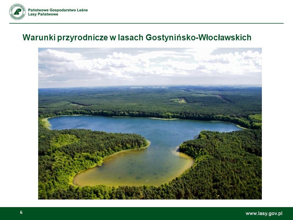6 Warunki przyrodnicze w lasach Gostynińsko-Włocławskich