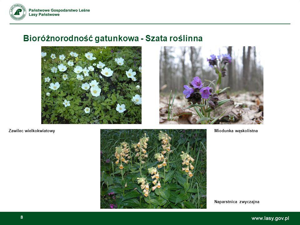 8 Bioróżnorodność gatunkowa - Szata roślinna Zawilec wielkokwiatowyMiodunka wąskolistna Naparstnica zwyczajna