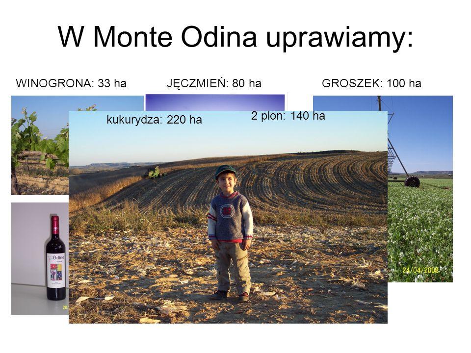W Monte Odina uprawiamy: WINOGRONA: 33 haGROSZEK: 100 haJĘCZMIEŃ: 80 ha kukurydza: 220 ha 2 plon: 140 ha