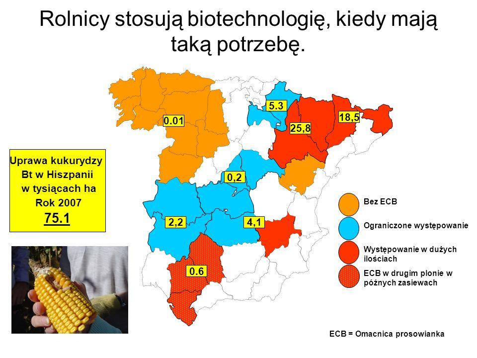 Mimo ograniczonej obecności Omacnicy prosowianki w Hiszpanii, upraw kukurydzy Bt jest więcej tam, gdzie potrzebują tego rolnicy.