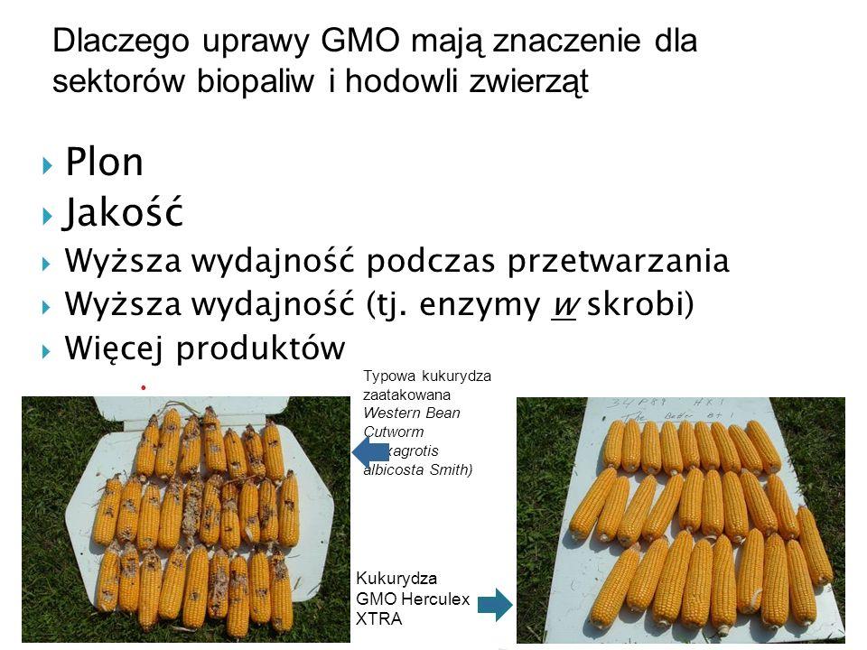 Plon Jakość Wyższa wydajność podczas przetwarzania Wyższa wydajność (tj. enzymy w skrobi) Więcej produktów Kukurydza GMO Herculex XTRA Typowa kukurydz